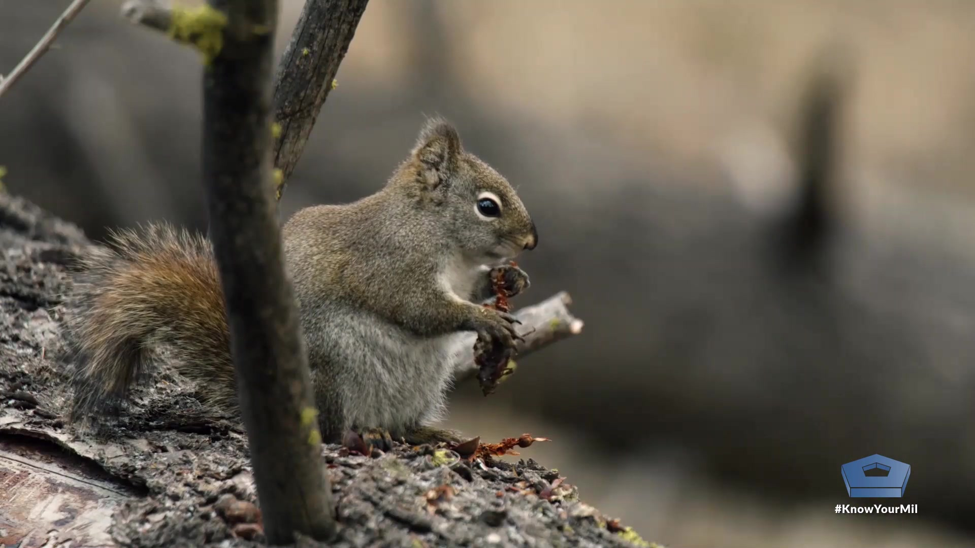A squirrel crouches by a tree.