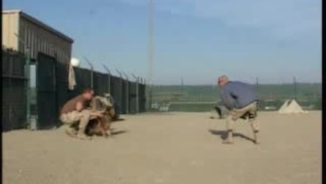 Desert Vision 3: Military Working Dogs