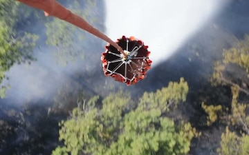 Bambi Bucket Drop