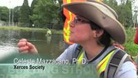 Volunteers Move Mussels Ahead of Restoration