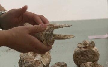 Dinosaur Bones Returned to Mongolia: B-roll of Bones
