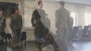 Bringing a part of Josh home; MWD of fallen handler adopted by family