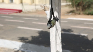U.S. Marines Working with Senegal to Add Demining Capability for West African Nation