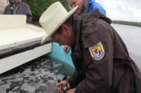 Prehistoric Paddlefish Released into Caddo Lake