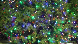 MCCS Tree Lighting illuminates holiday season