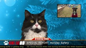News Cat 2: Happy Holidays