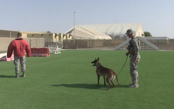 Military Working Dog - A Defender's Best Friend