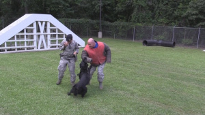 Col King tours Military working dog facility