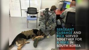 Former Explosive Detection Dog Reunited with Special Forces Handler