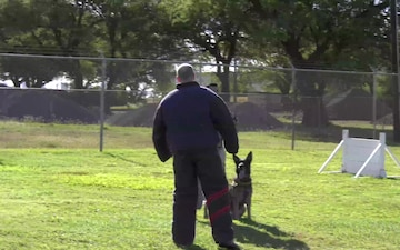 Reporting For Duty: Military Working Dogs