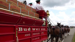 Budweiser Clydesdales Visit 119th Wing