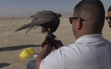 Falconers help bridge the gap between Soldiers and Kuwaitis