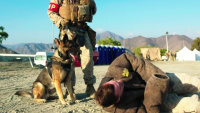 U.S. Marines Showcase K-9 Training During Native Fury 18