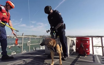 Coast Guard Canine Explosive Detection Team: Hoist Training