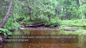 Enhancing Sea Lamprey Control