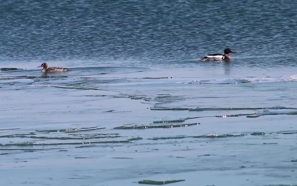 B-Roll of Birds in Straits of Macinac