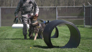 88 Air Base Wing Security Forces Squadron Military Working Dogs