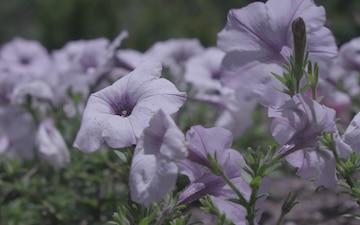 Yamaguchi Flower Land