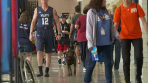 What a Service Dog Means to the Athletes