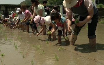 MCAS Iwakuni community take part in local rice planting (Package/Pkg)