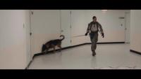 Iron Dog Compeition