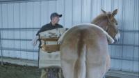 SOF Horsemanship