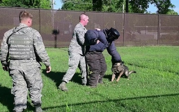 Military Working Dog demo