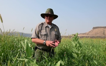 Milkweed and the Preservation of the Monarch