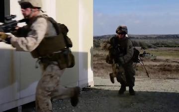 Preserving Wildlife and the Habitat Aboard Marine Corps Base Camp Pendleton