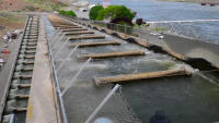 Fish Cooling Systems at Snake River Dams