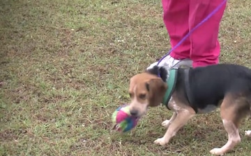 American Society for the Prevention of Cruelty to Animals Help After Hurricane Michael