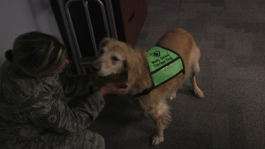 178th Wing Animal Assisted Activities Program promotes well-being for Airmen