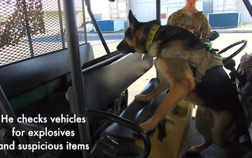 A Day in the Life of a Military Working Dog