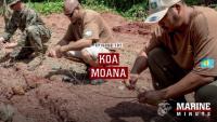 Marine Minute: Koa Moana