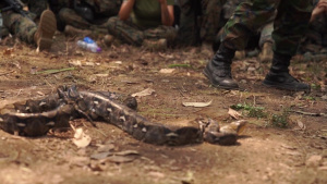 Cobra Gold 19: (B-Roll) Royal Thai, US Marines learn essential jungle survival skills at Ban Chan Krem