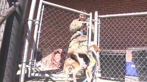Reserve Soldiers visit SPCA