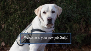 Sully Gets a New Job