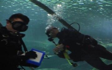 Swarm Minneapolis/Divers
