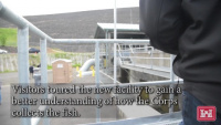 Fall Creek Adult Fish Collection Facility dedication