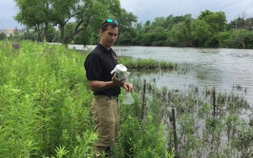 Beetles Released as Invasive Species Control at Seneca Bluffs Project