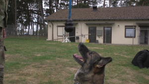 Military Working Dogs Spangdahlem AB, Germany