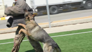 332 ESFS MWDs Demo at Joint Training Center Jordan