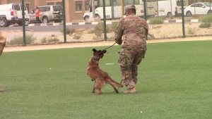 B-roll of Military Working Dog
