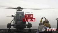 Marine Minute: Tiger Triumph
