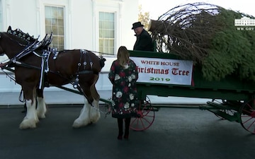 The First Lady Participates in the White House Christmas Tree Delivery