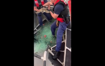 Coast Guard releases rescued sea turtle near South Padre, Texas