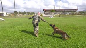 Sky Warrior Swap - Military Working Dog Handler - Episode 3 of 3