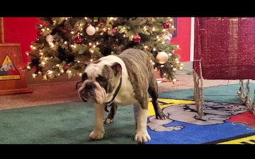 Happy Holidays from Bulldog Brigade