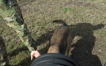 628th Security Forces Squadron trains new military working dogs