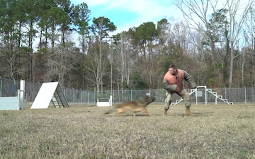 A 628th Security Forces Squadron military working dog handler B-roll